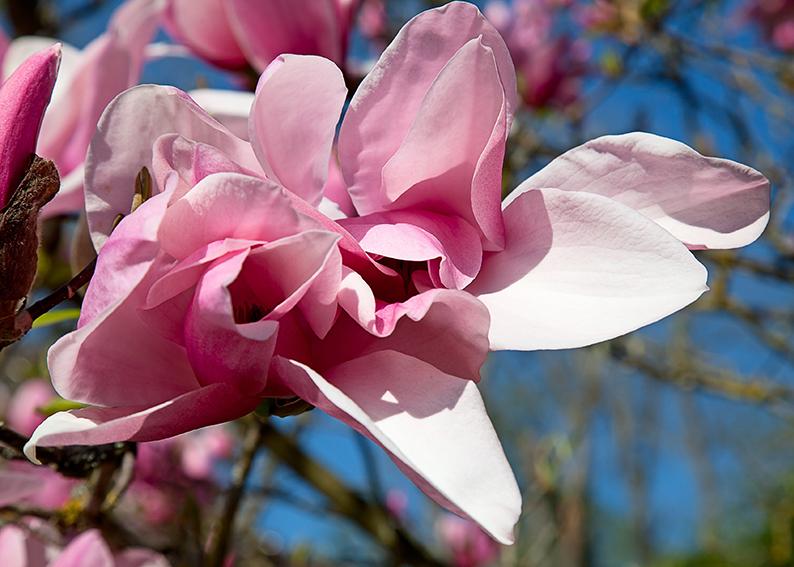 motivo floreale collezione del mese di dicembre Ditale in porcellana cinese